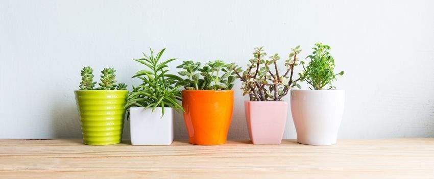 choisir-ses-plantes-dinterieur-post