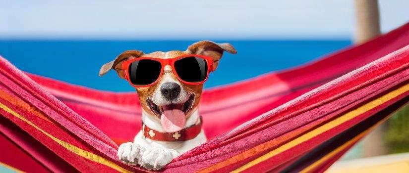 confier-animal-de-compagnie-vacances-post