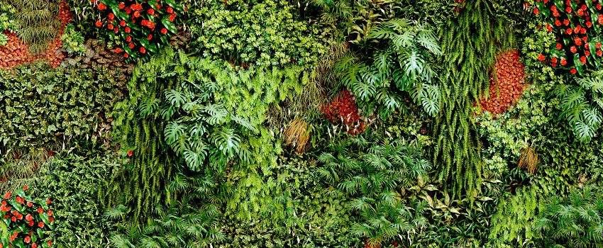diy-realiser-mur-vegetal-post