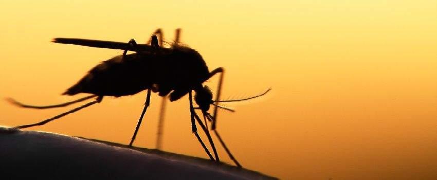 les-astuces-anti-moustiques-post