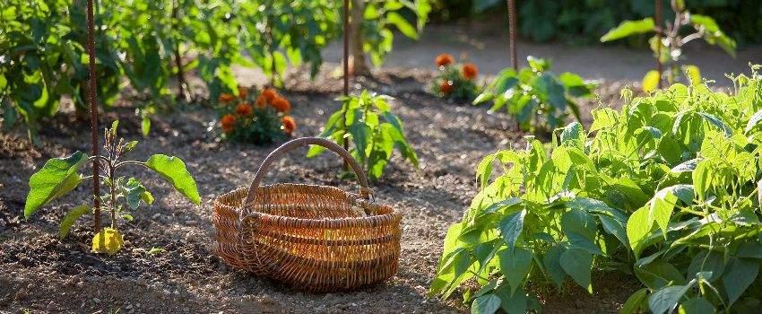 planter-son-propre-potager-faire-ses-produits-post