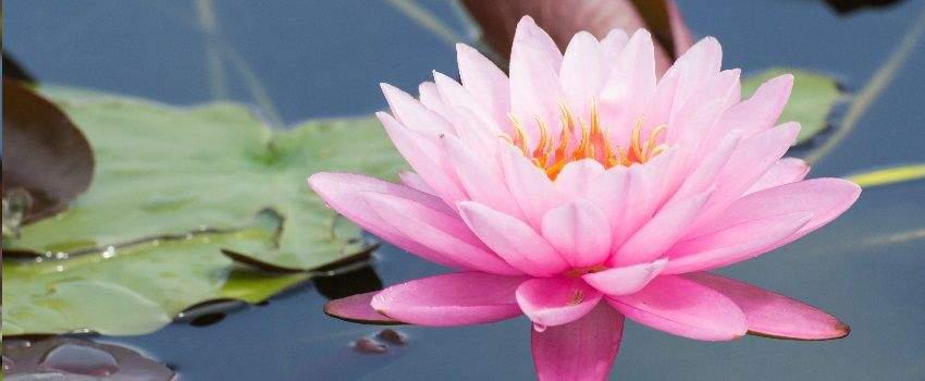 secrets-dinde-le-lotus-sacre-post
