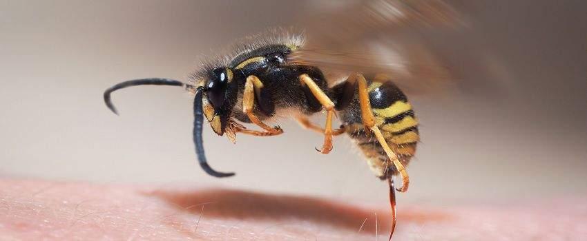 soigner-piqures-insectes-naturellement-post