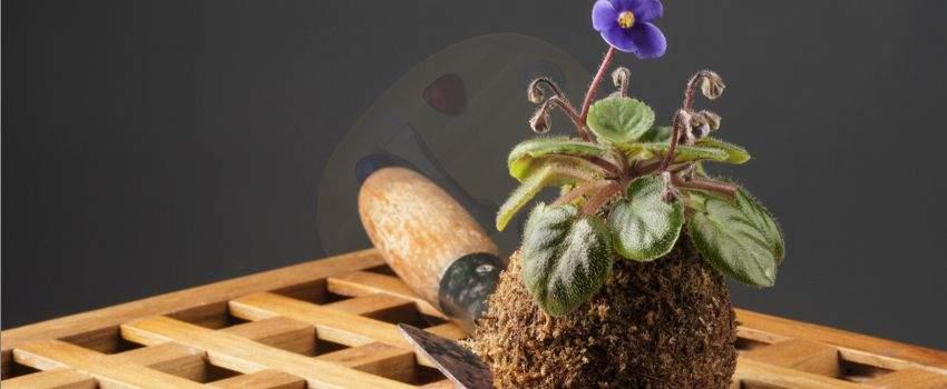 tendance-jardin-realisation-dun-kokedama-post